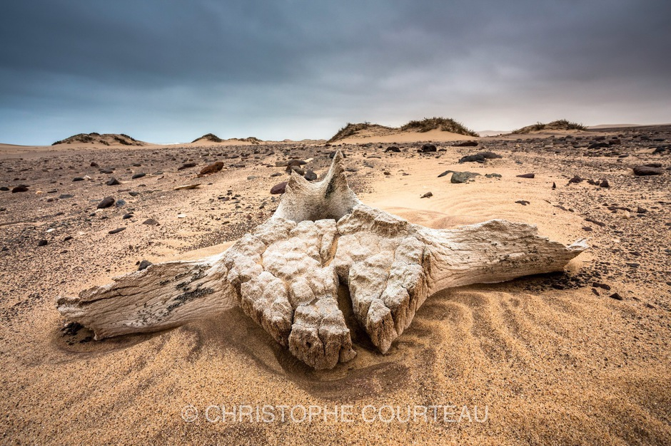 Bones of Whales grounded on a beach,  northern Skeleton Coast National Park