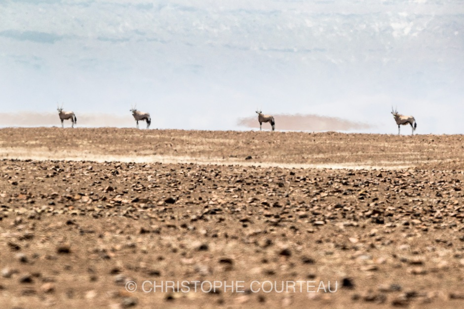 Oryx in a mirage due to the Heat in the Hartmann Valley in Namibia